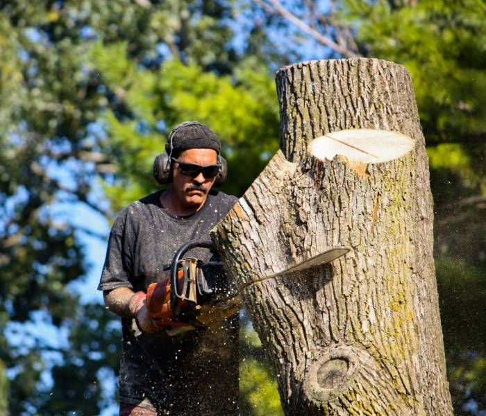 A contractor demonstrating chainsaw techniques for tree cutting in Burlington.
